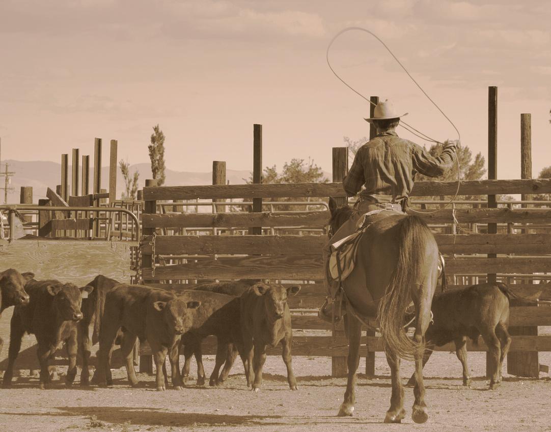 Cornered, Spainhower Ranch